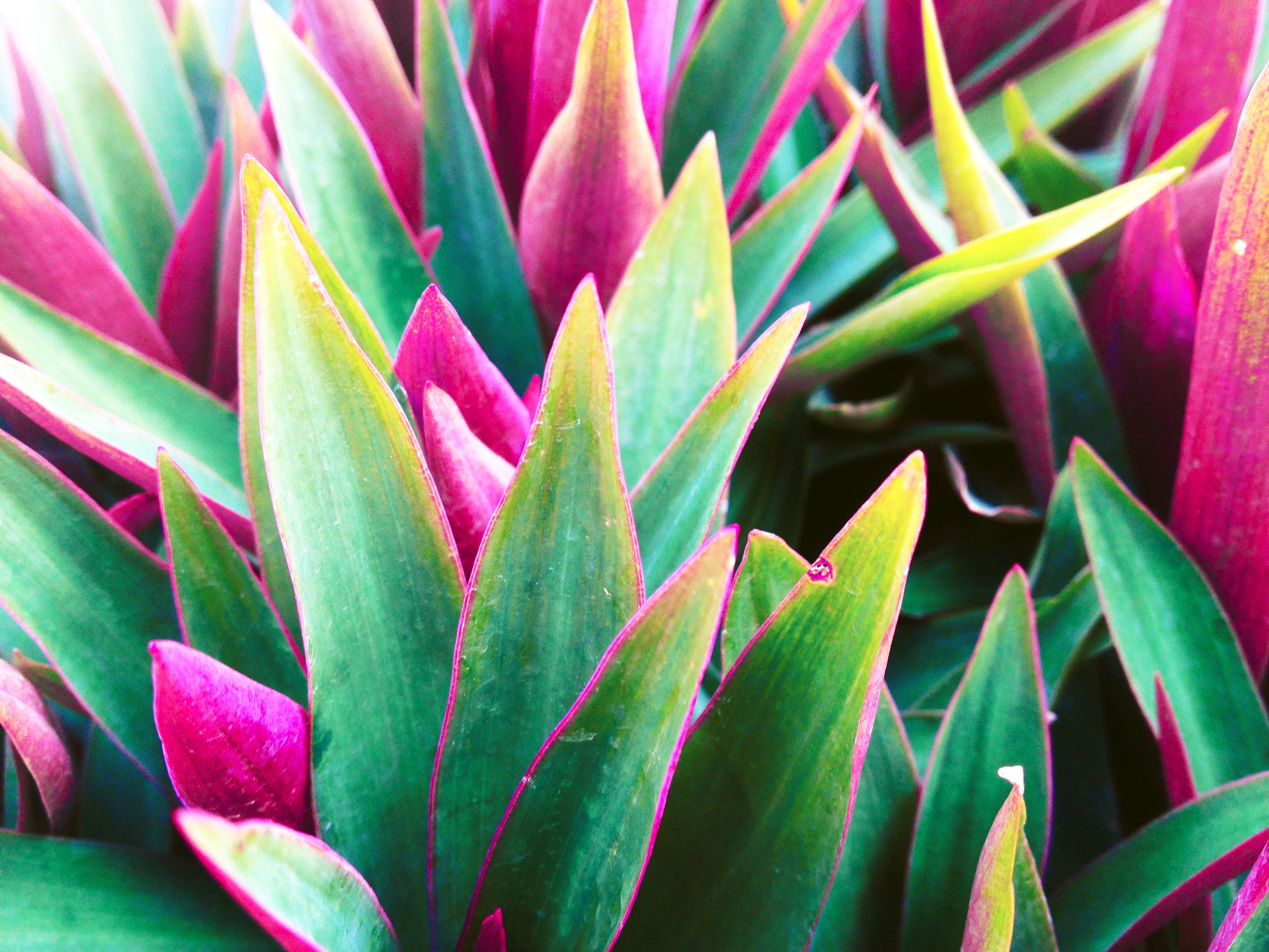 Kostenloses Stock Foto zu gras, grün, natur, rot