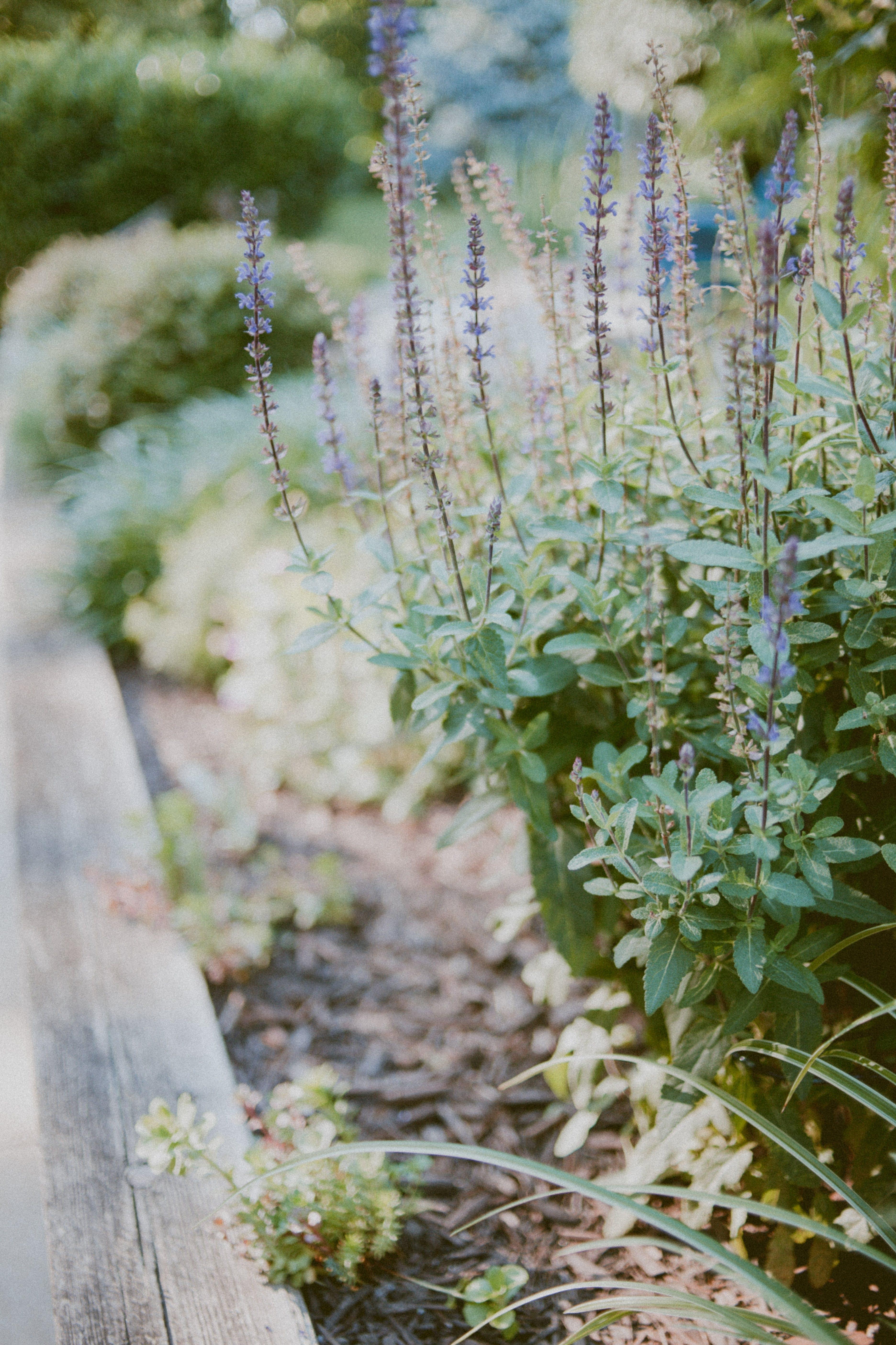 Selective Focus Of Purple Petaled Flowers