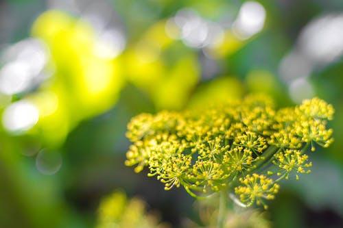 Ảnh lưu trữ miễn phí về cỏ, hoa, màu xanh lá, rau