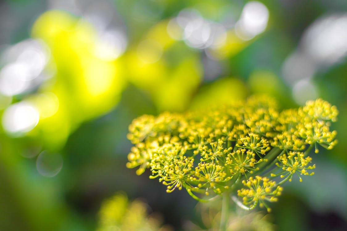 綠色, 花, 花卉