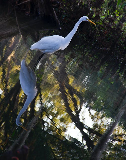 Fotos de stock gratuitas de Florida, grúa, pantanos