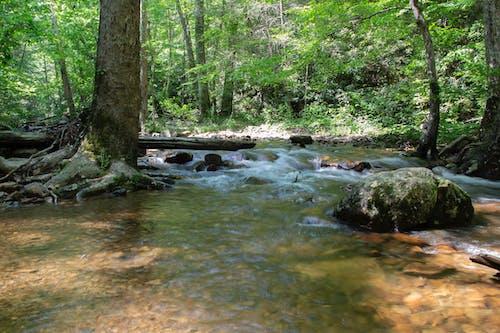 小徑, 山區水域, 水, 瀑布 的 免費圖庫相片