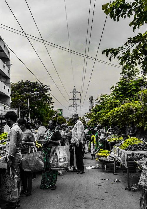 #hindistan, #yeşil, Çiftçi marketi, renk dağılımı içeren Ücretsiz stok fotoğraf