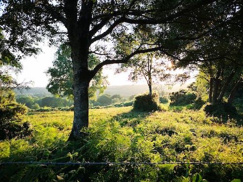 Ingyenes stockfotó Anglia, fák, kemping, naplemente témában
