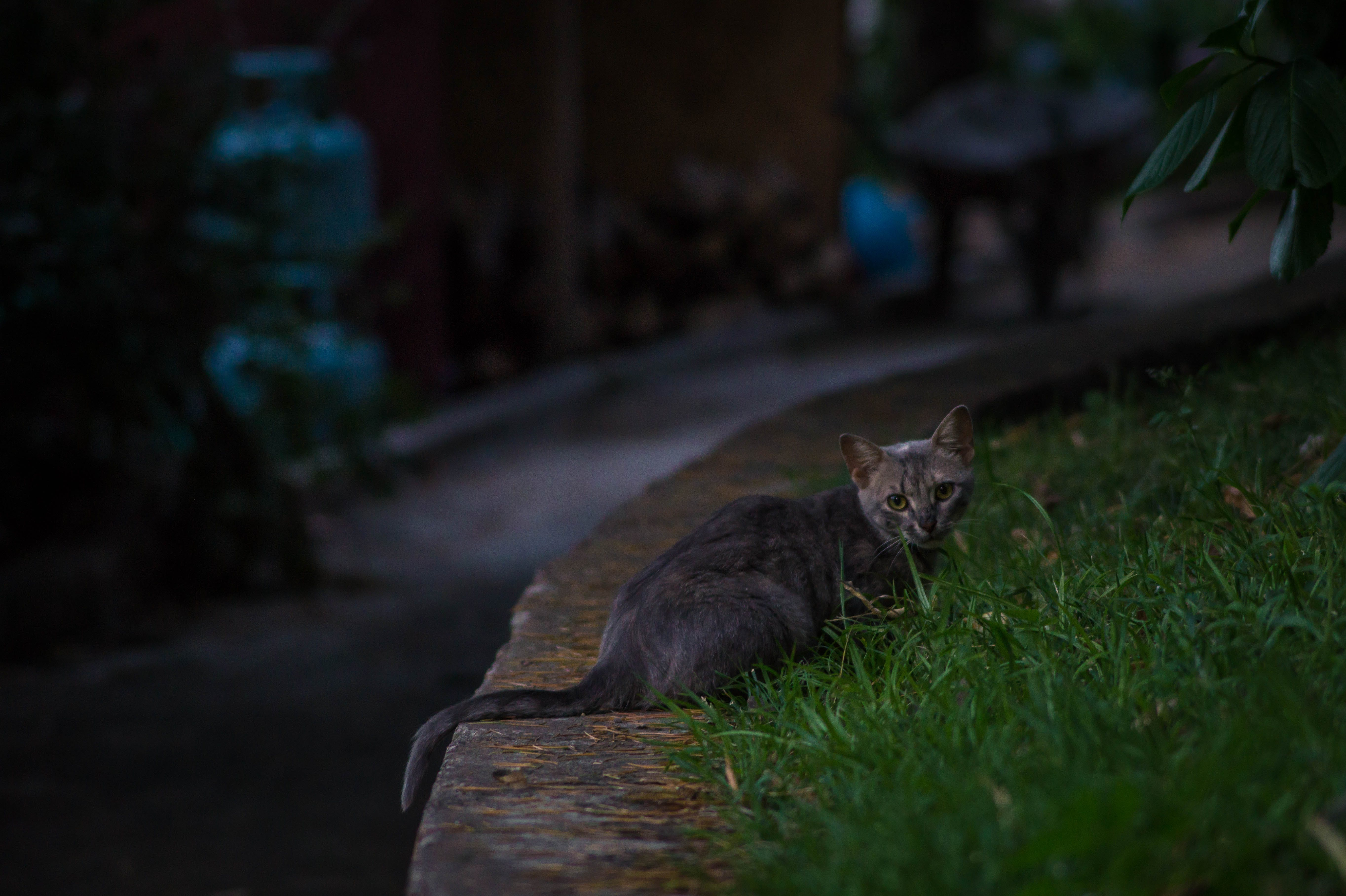 Black Tabby Cat on Green Grass during Night Time