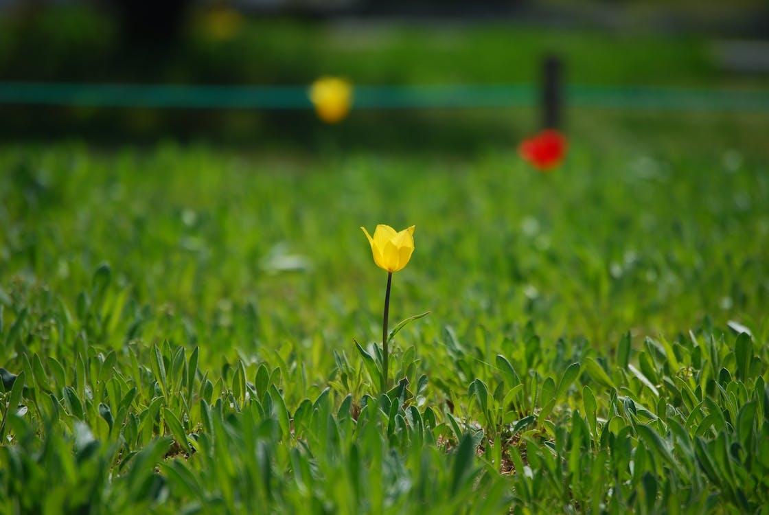 Kostenloses Stock Foto zu 봄, 꽃, 꽃들