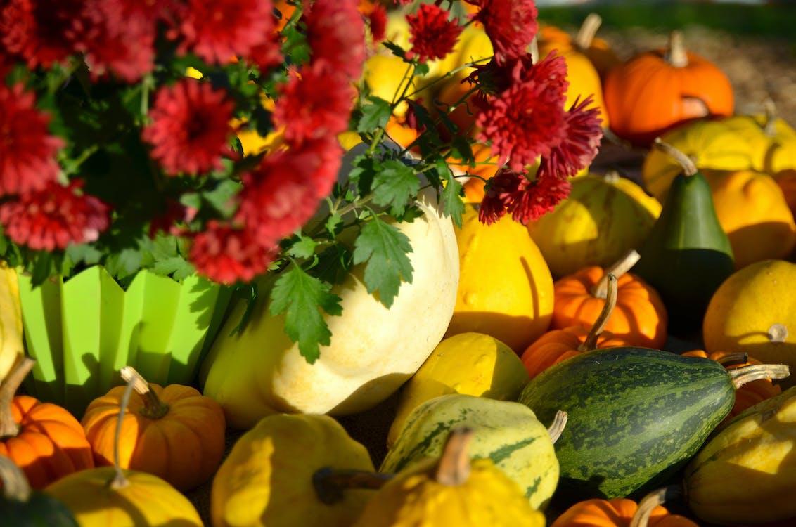 halloween, nature, pumpkin