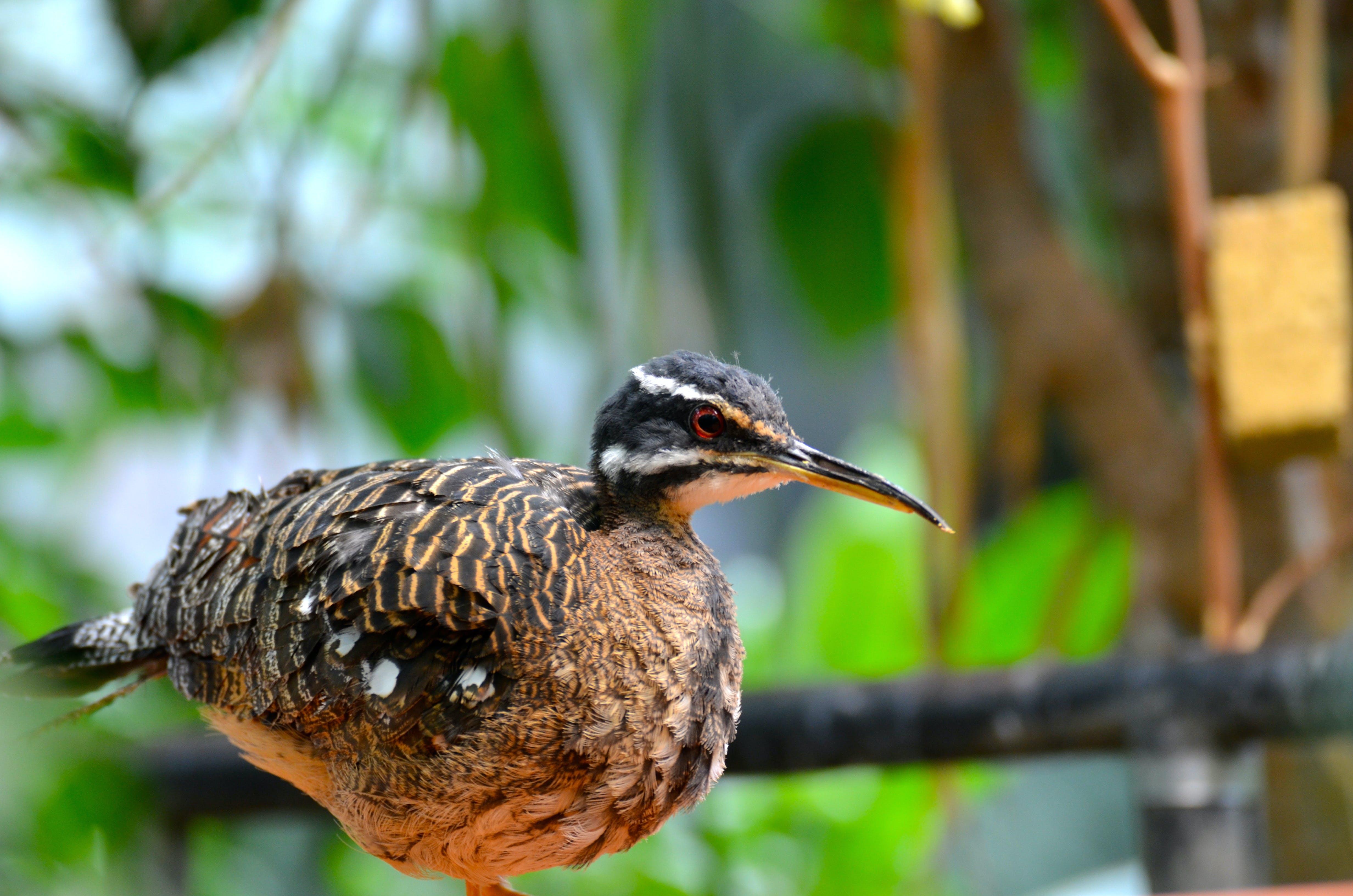 Free stock photo of nature, bird, animal, animal photography
