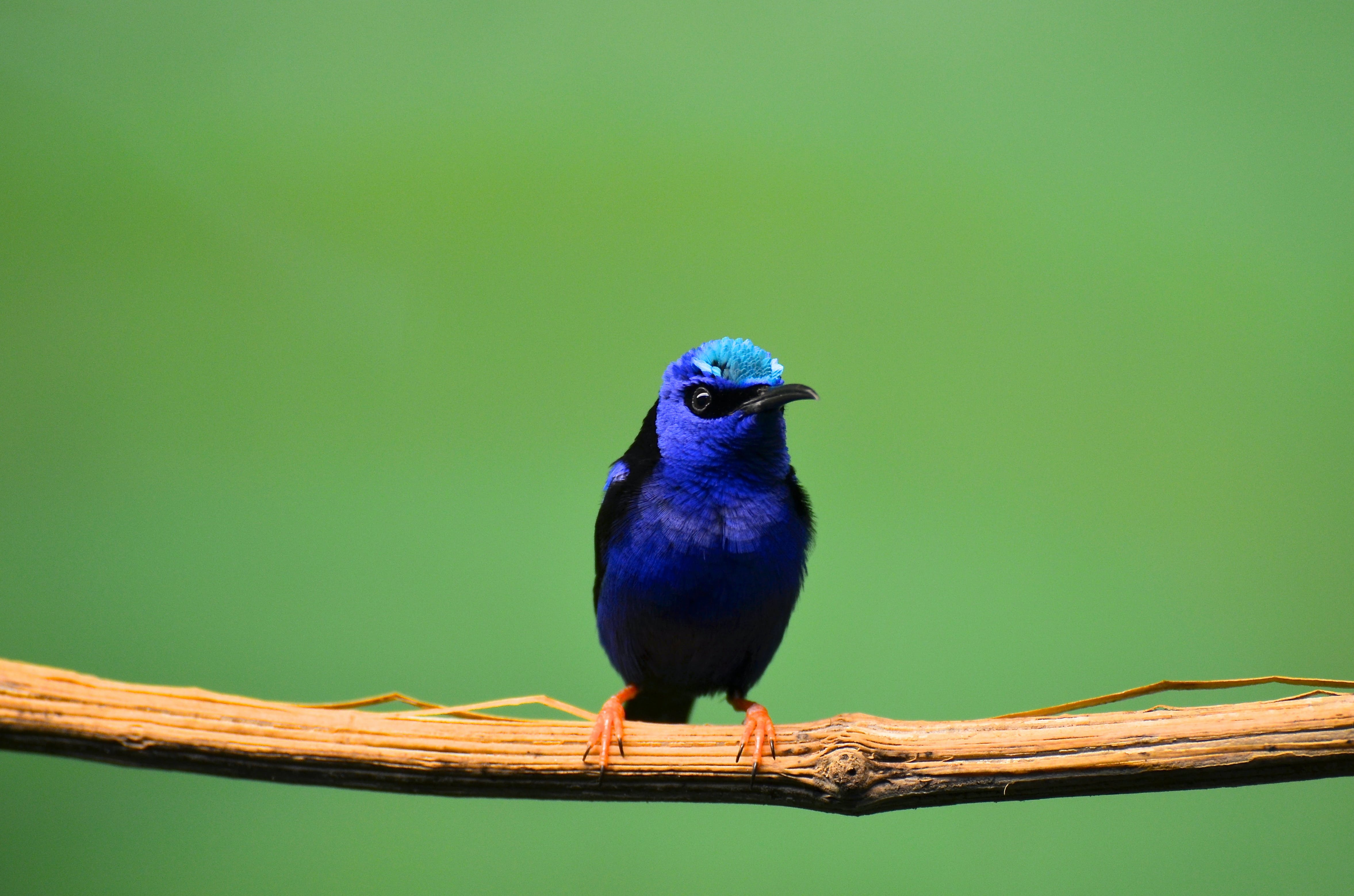 Blue Bird Perched On Tree Branch