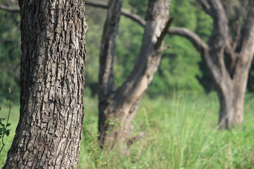 Free stock photo of grass, tree