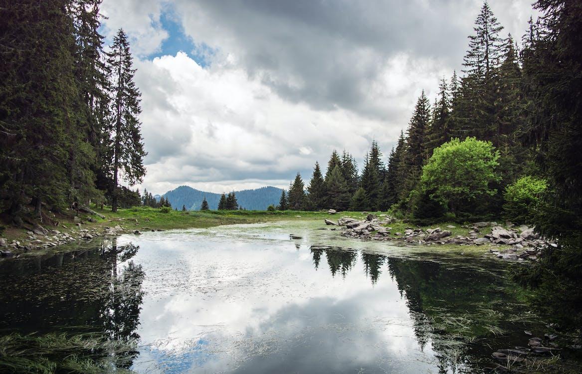 #lake #wald #natur #grün