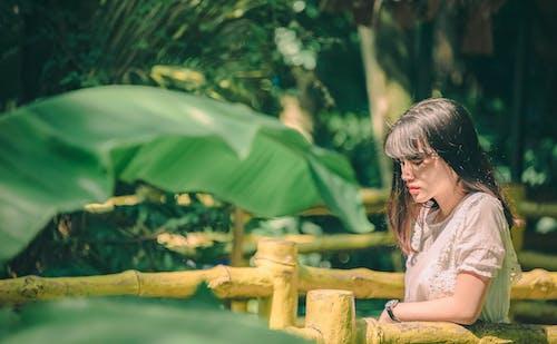 Základová fotografie zdarma na téma banánové listy, denní světlo, holka, krajina