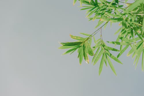 Low-angle Photo of Ovate Leafed Plant