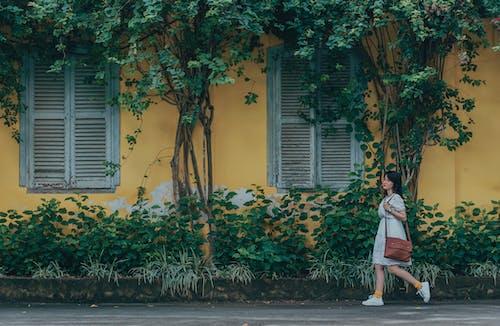 Foto profissional grátis de andando, árvores, caminhando, cores