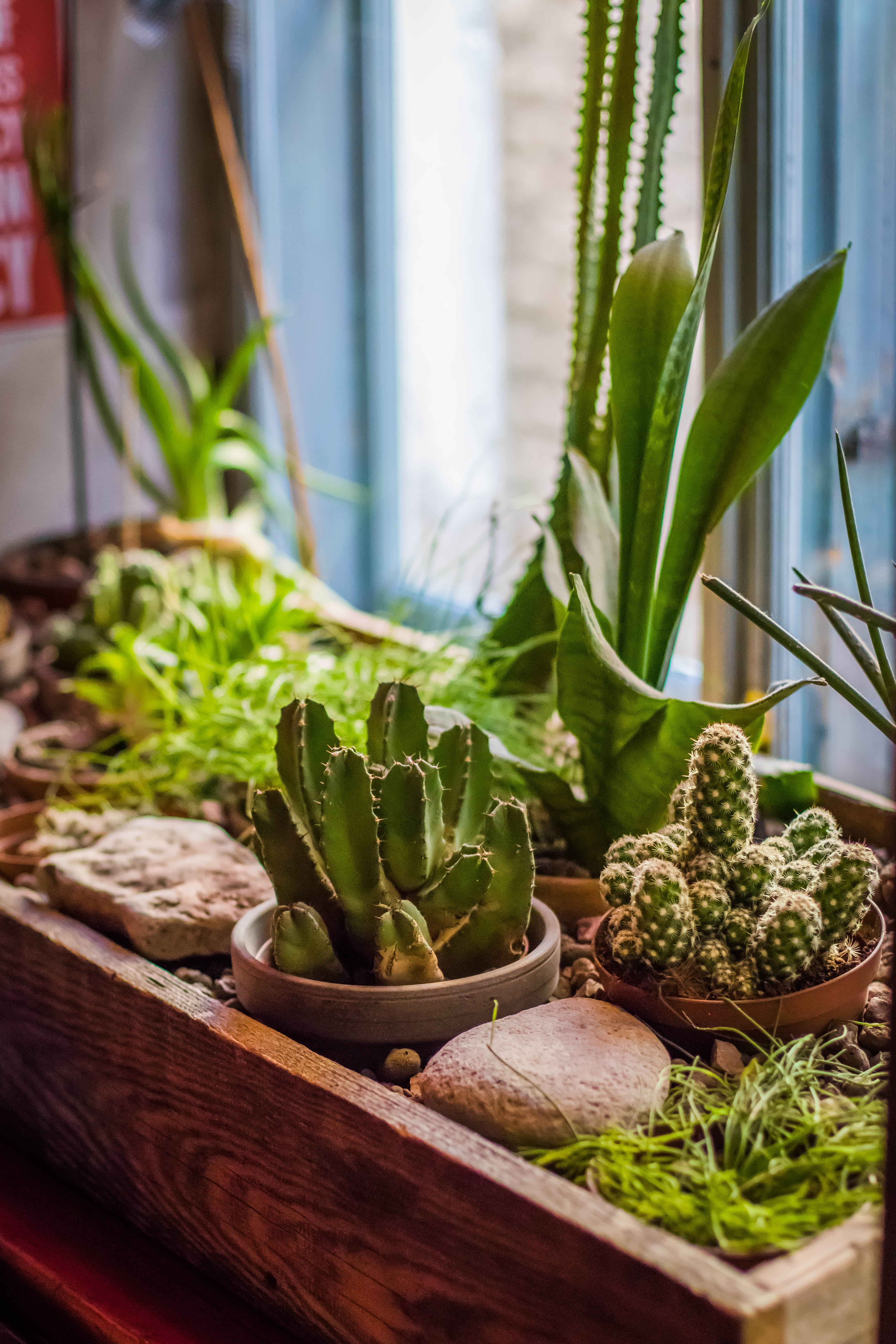 Selective Focus Photo Of Green Cacti Plants