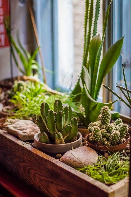 bloempotten, botanisch, cactussen