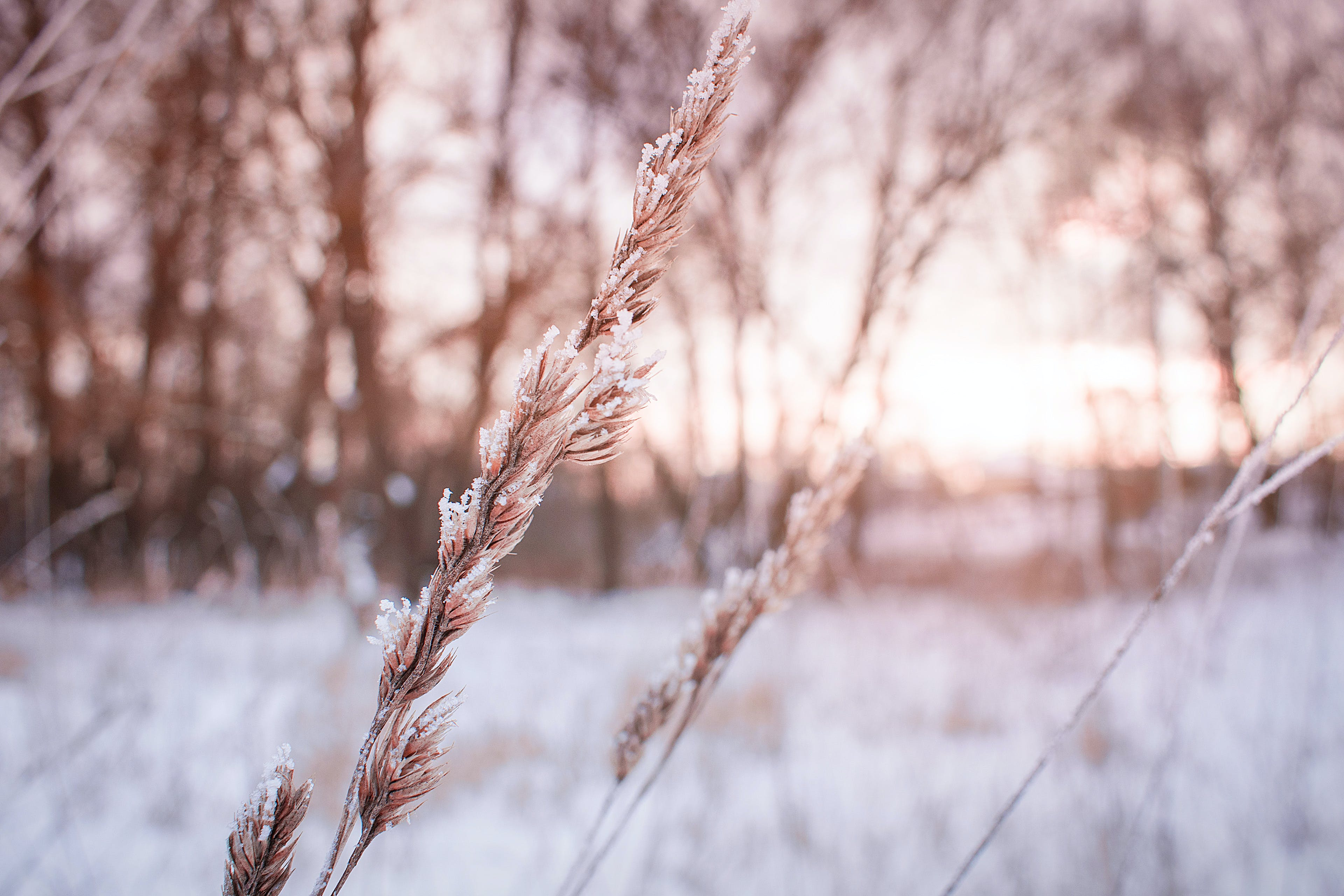 Shallow Focus Photography of Plant during winter