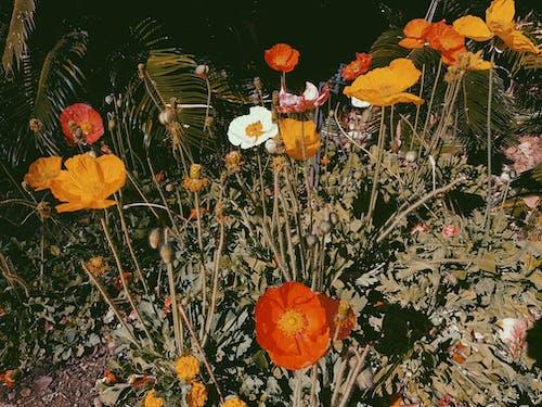 Ilmainen kuvapankkikuva tunnisteilla kukat, luonto