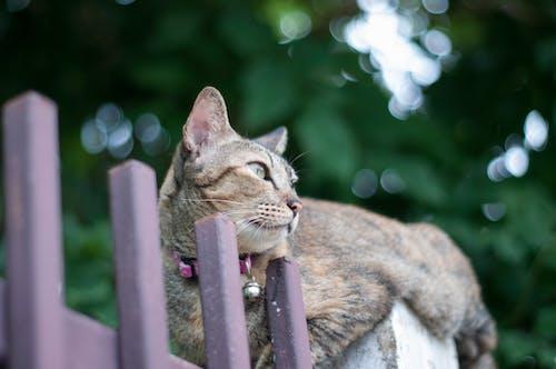 Fotobanka sbezplatnými fotkami na tému mačka