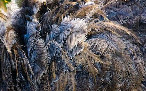Бесплатное стоковое фото с природа, сухой, узор, цвета