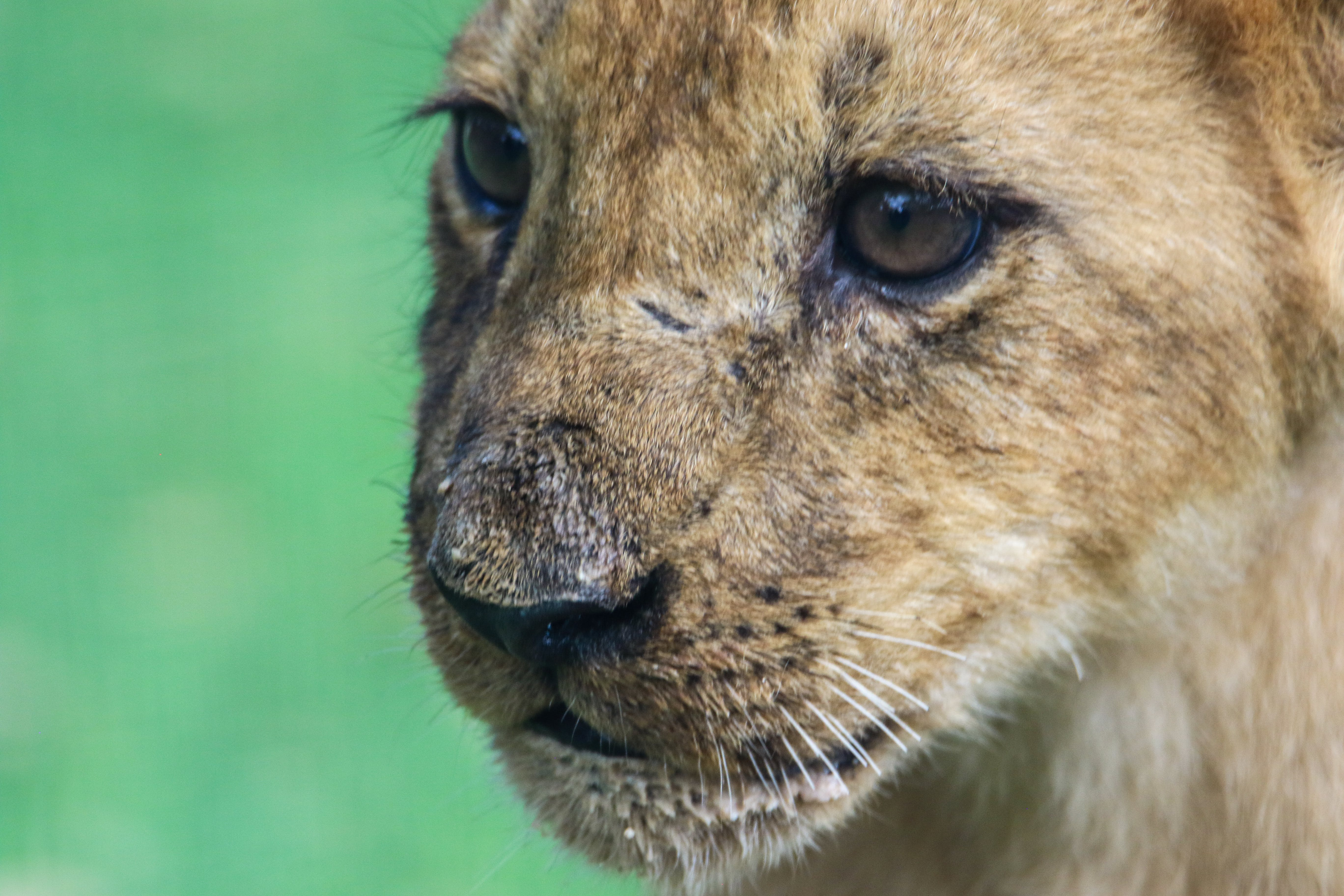 Brown Cub in Shallow Focus Photography