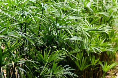 Gratis stockfoto met bodem, botanisch, close-up, dag