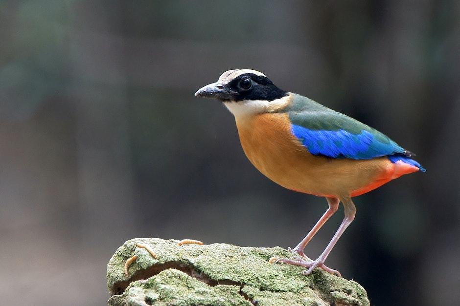 Orange Blue Green and White Bird on Rock