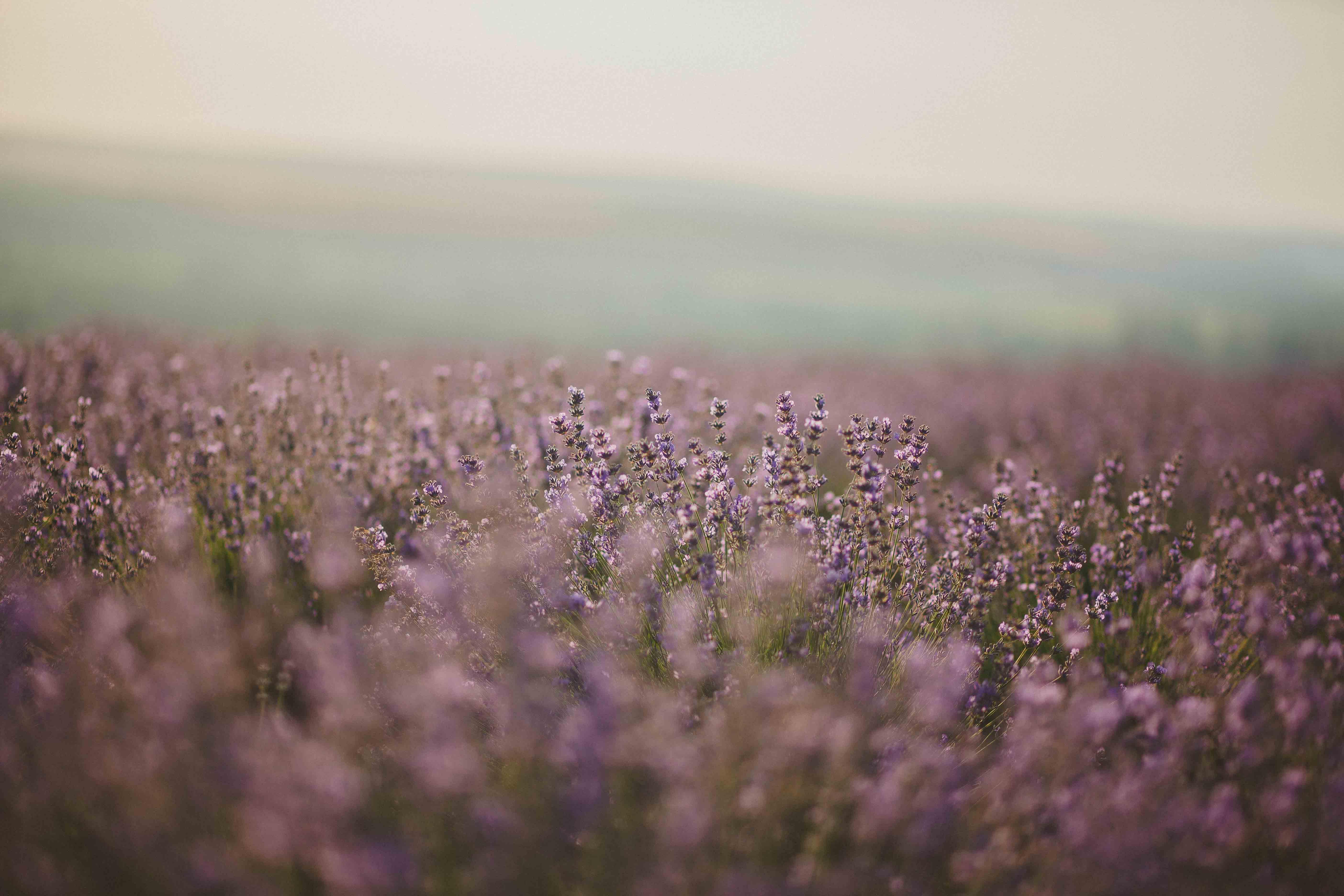Základová fotografie zdarma na téma barvy, denní, fialová, flóra