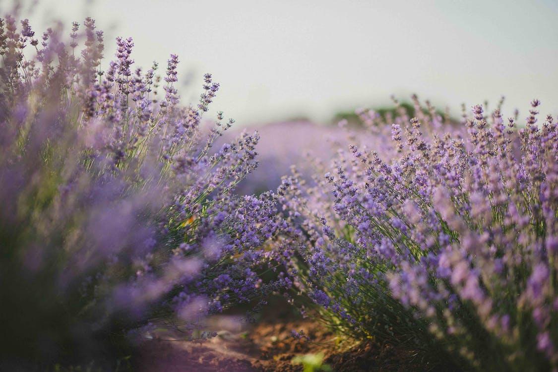 aroma, aromatisch, bloeiend