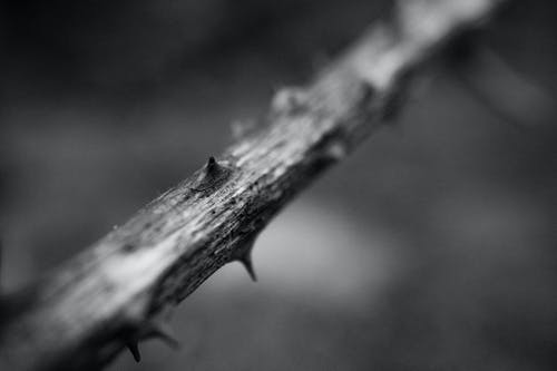 Free stock photo of black and white, branch, branches, forrest