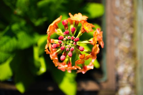 Free stock photo of flower, flower buds, flowers, mother nature