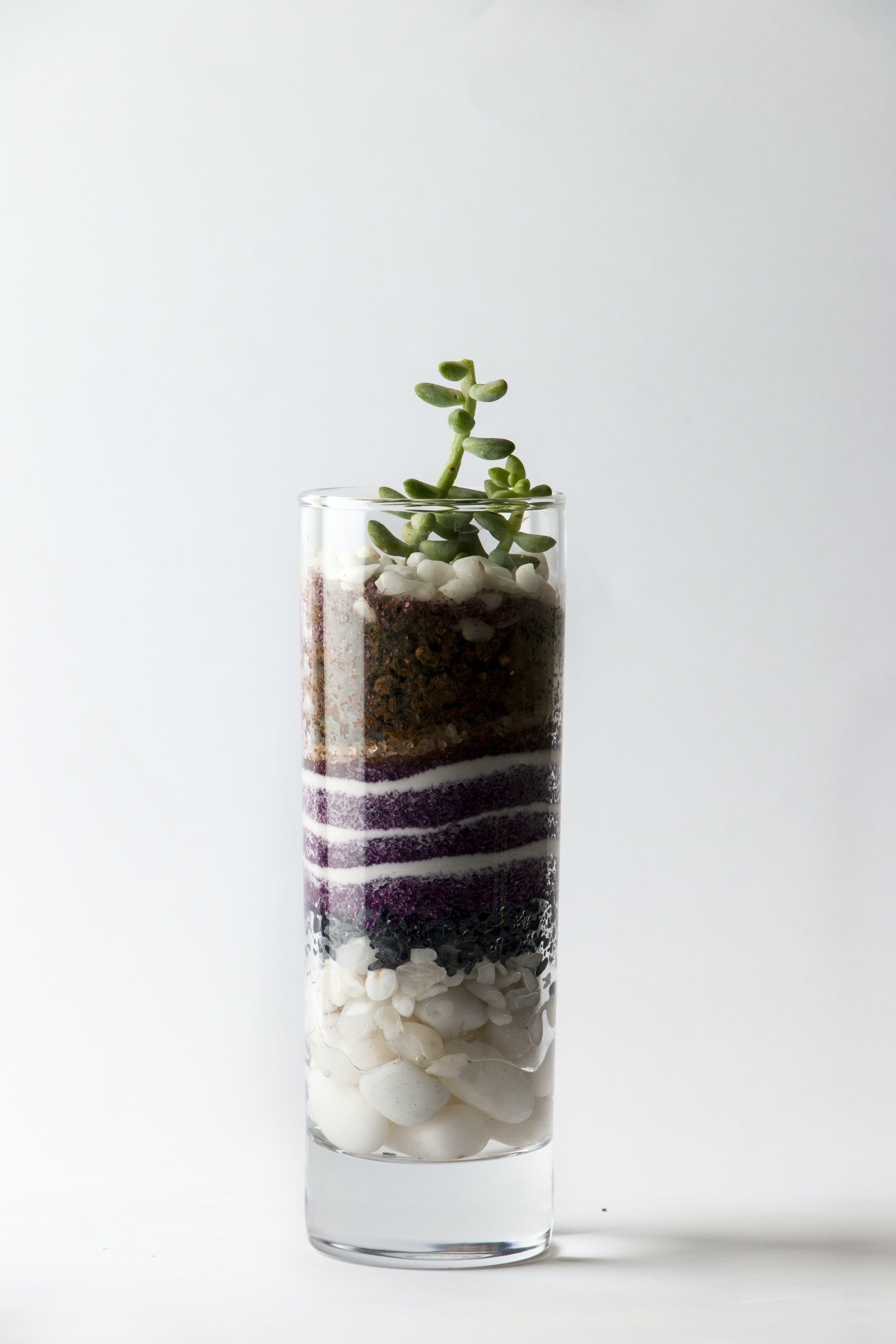 Free stock photo of Alma libre, garden, home decor, house plant