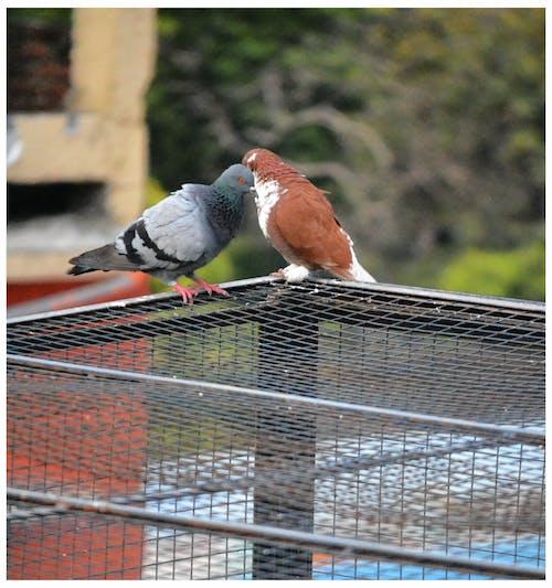 Fotos de stock gratuitas de Adobe Photoshop, amantes, ave de rapiña, aves del paraíso