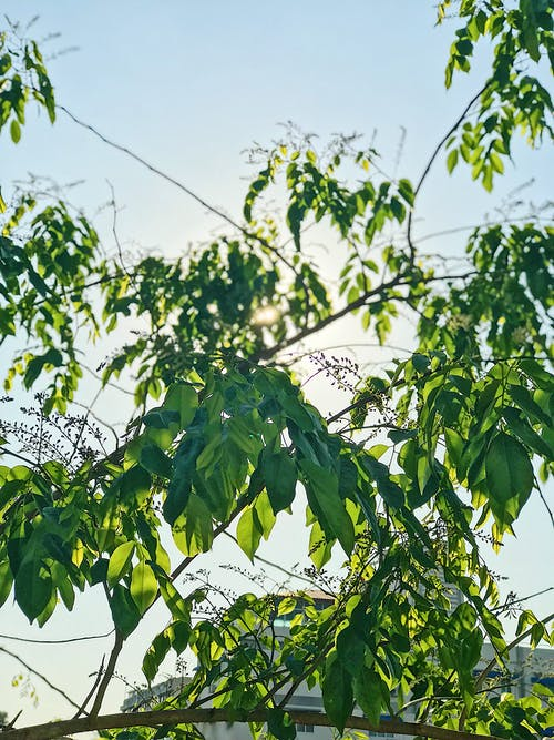 Fotos de stock gratuitas de árbol, arboles, cielo azul, cielos azules