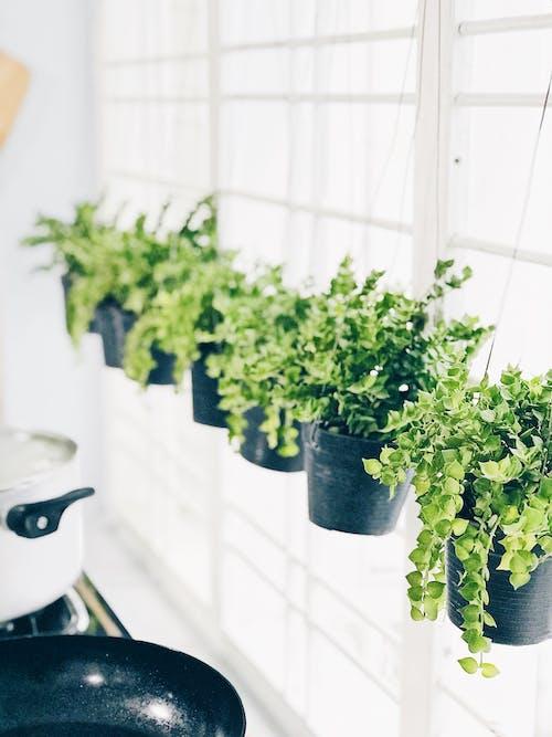 增長, 戶外, 掛, 植物 的 免费素材照片