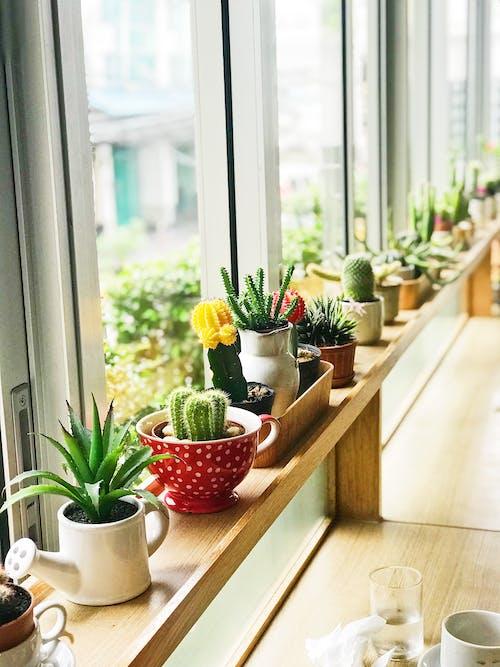 仙人掌植物, 仙人掌花, 內部, 多肉植物 的 免费素材照片