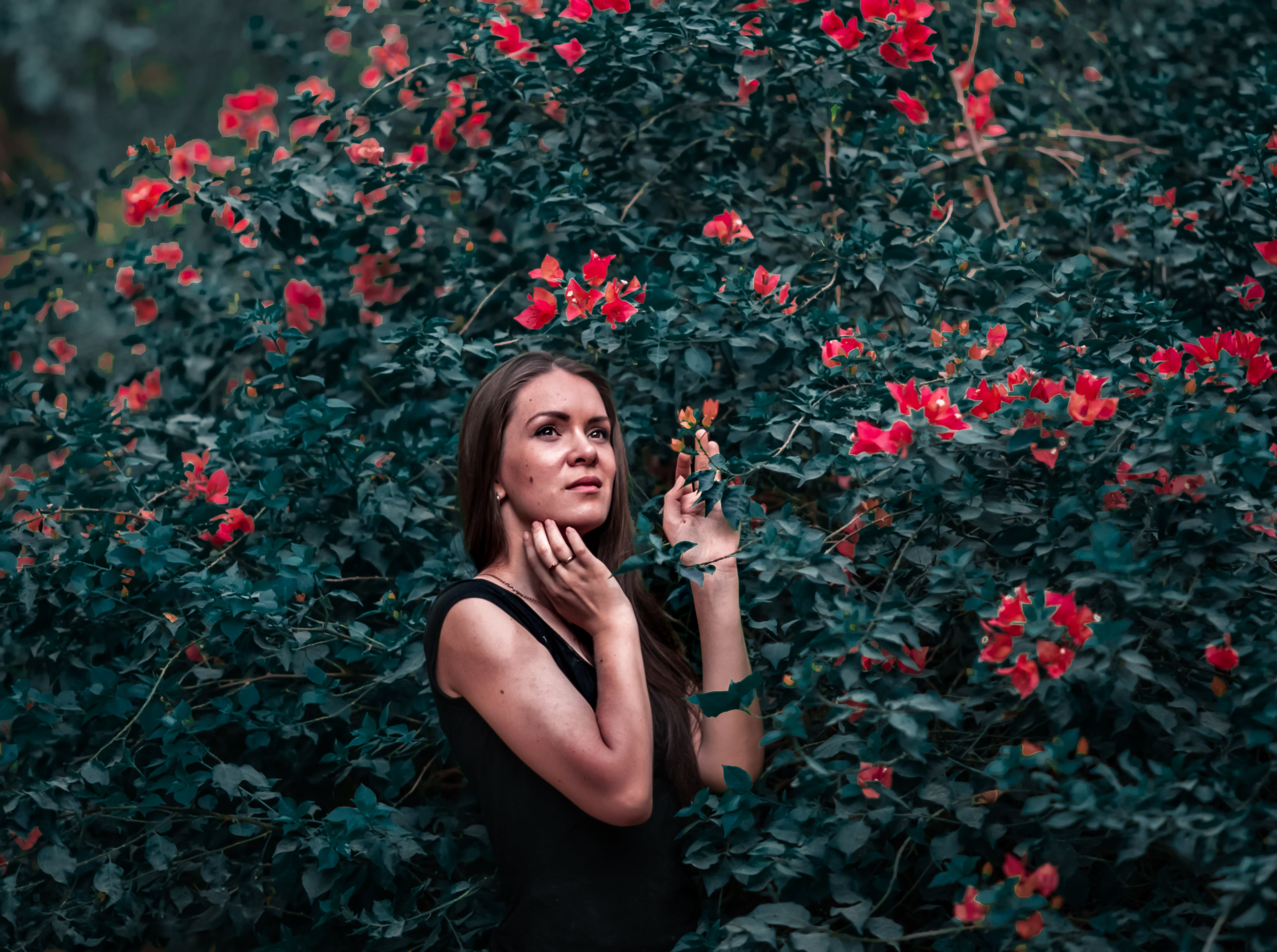 Woman Holding Red Petal Flower in Shallow Focus Photography