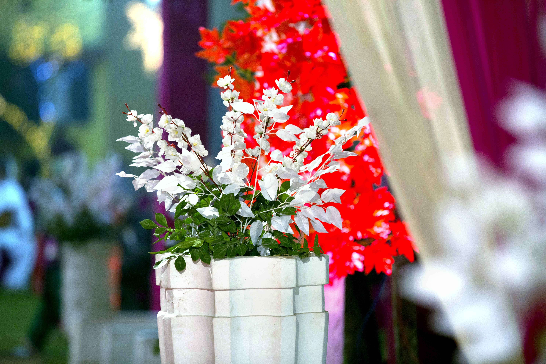 Gratis arkivbilde med blomst, bryllup, gryte, grønn