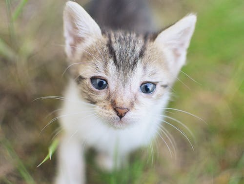 Δωρεάν στοκ φωτογραφιών με macro, γατάκι