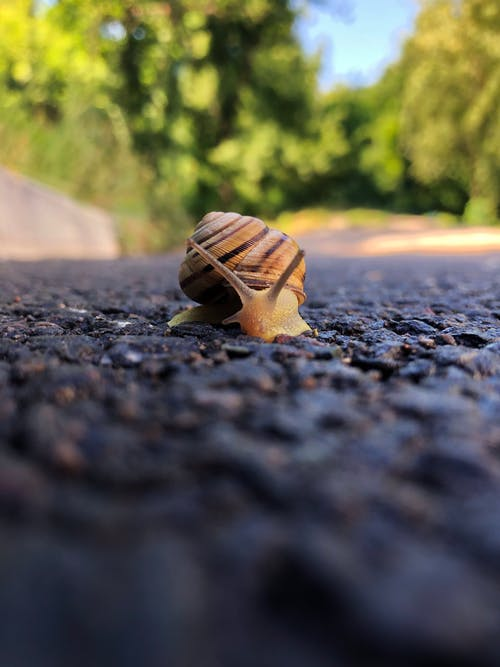 Free stock photo of mother nature, snail, snail shell