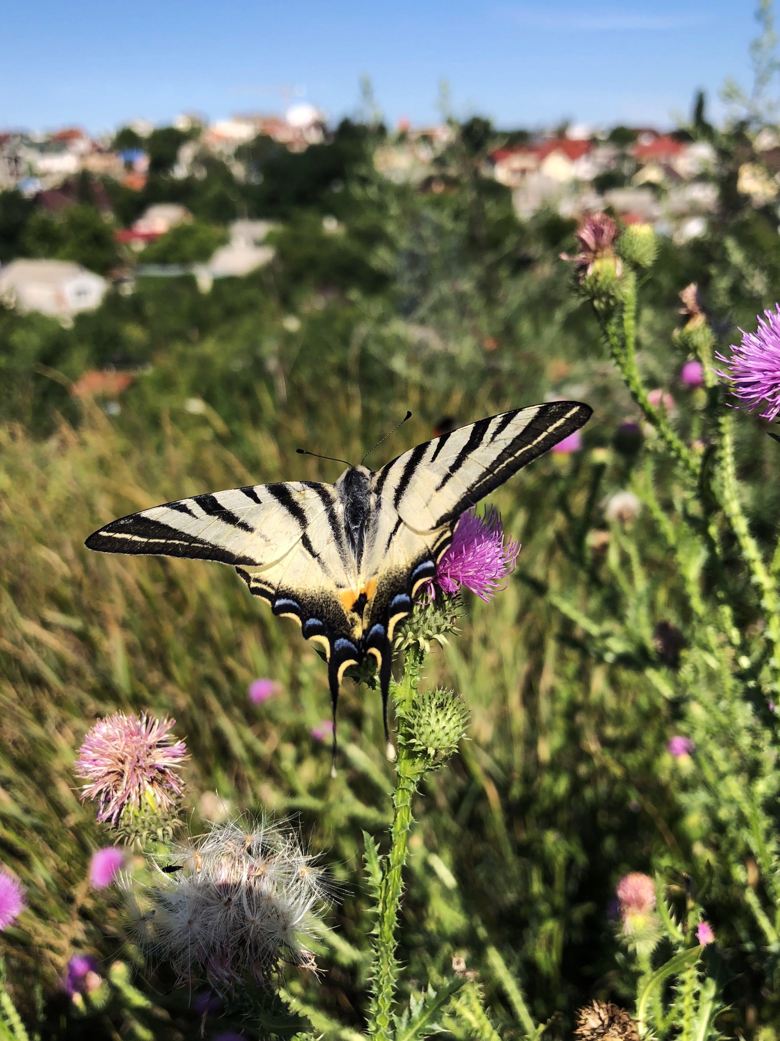 Gratis arkivbilde med moder natur, sommerfugl, sommerfugl på blomst