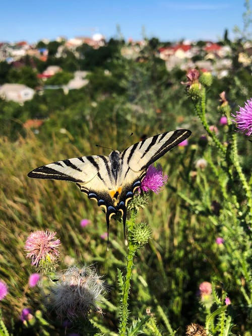Free stock photo of butterfly, butterfly on a flower, mother nature