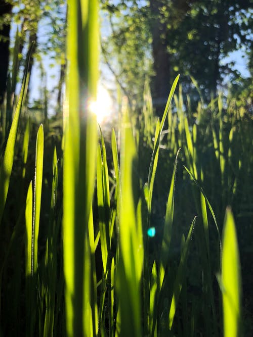 Free stock photo of grass, green, mother nature