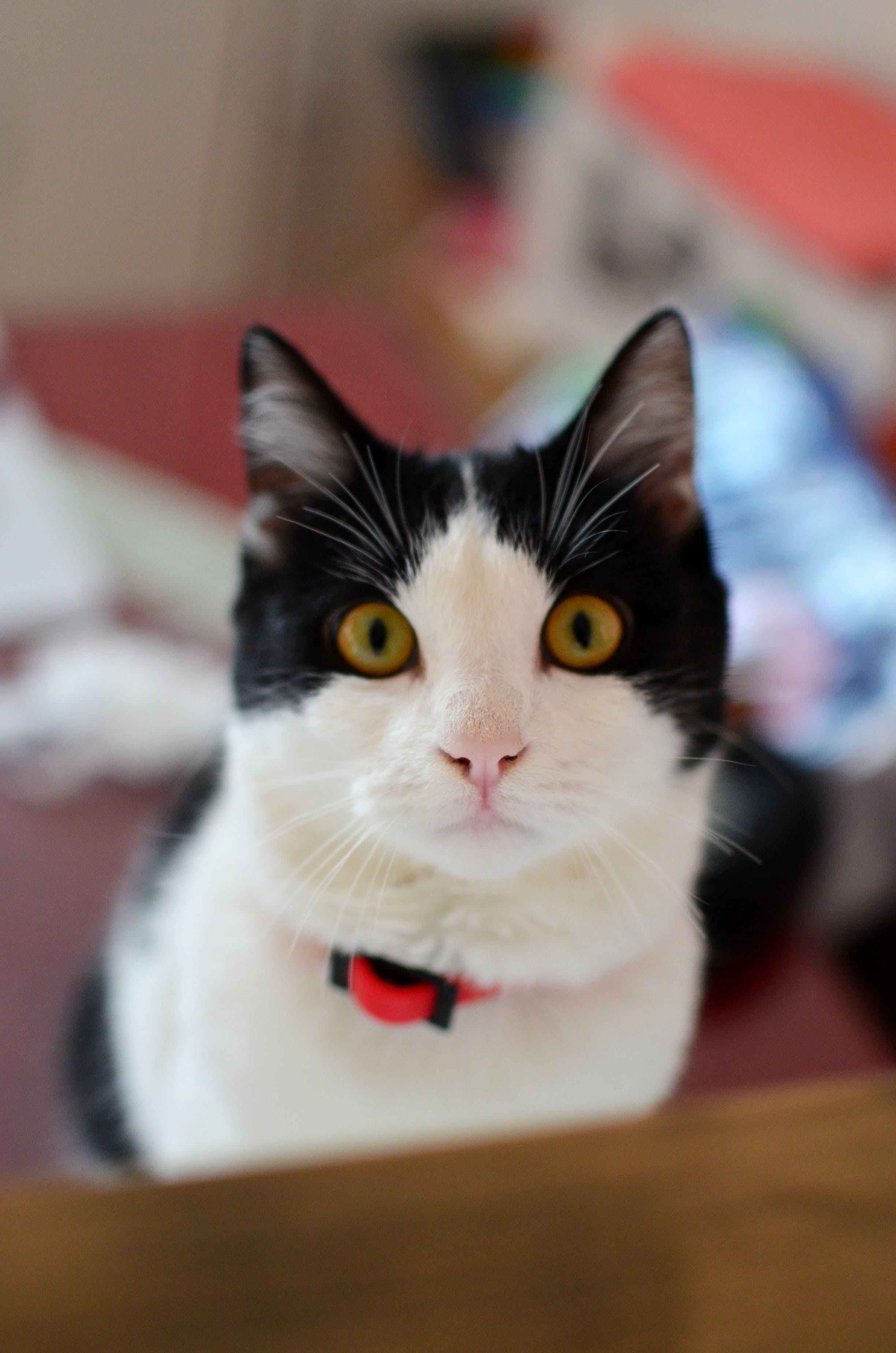 Free stock photo of black, cat, fluffy, playful
