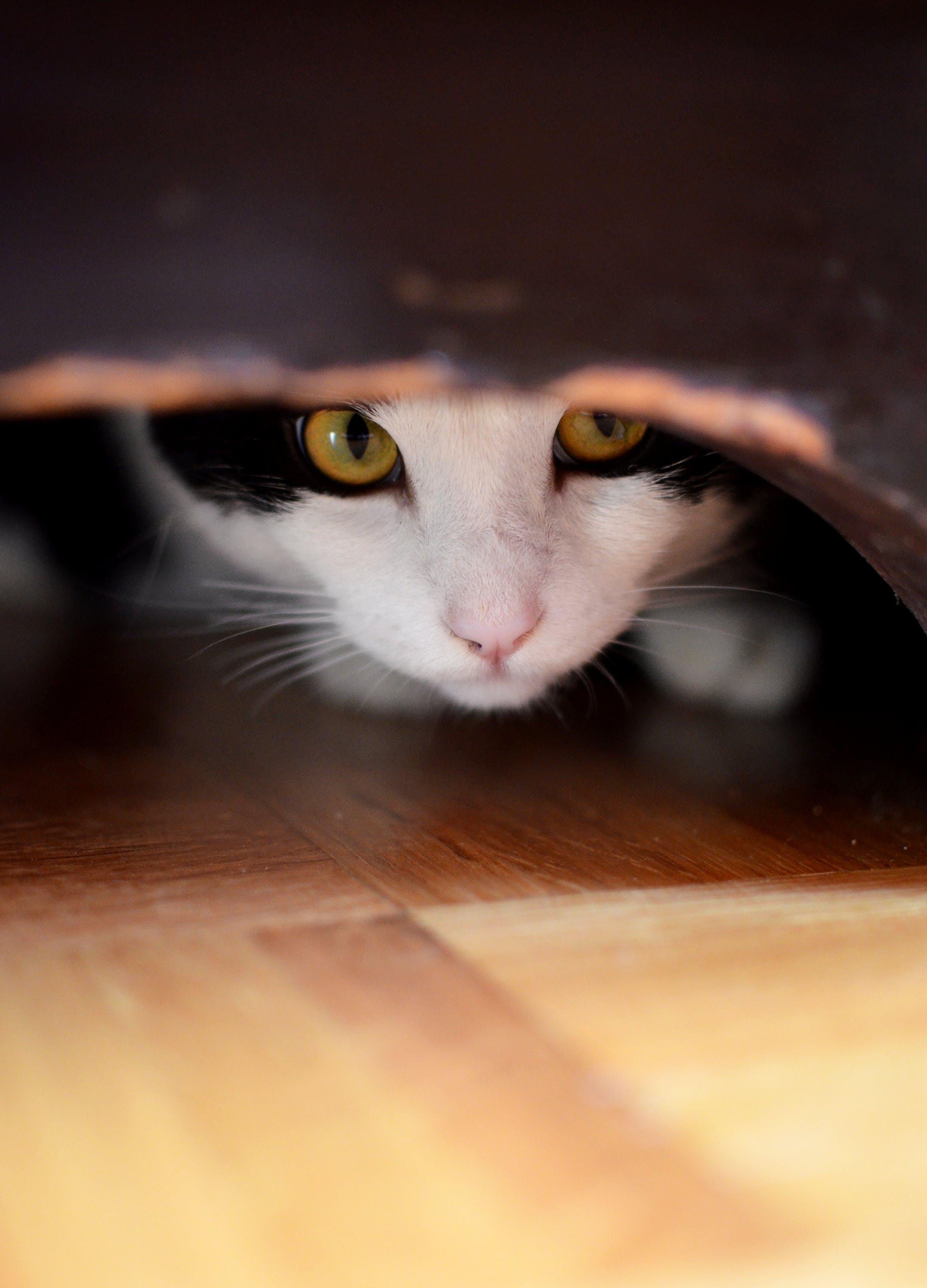 Free stock photo of cat, dresser, hide and seek, hiding