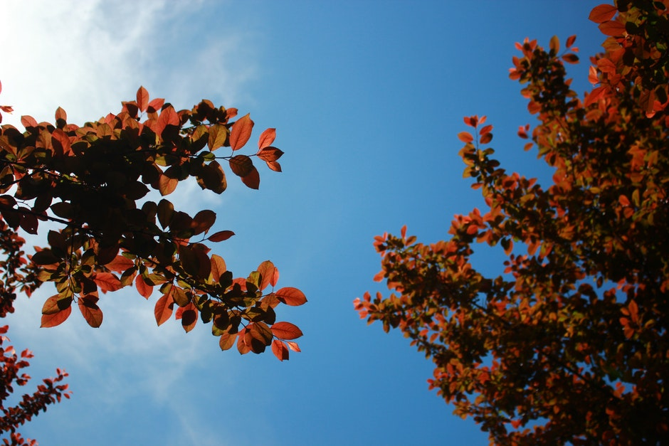 Orange and Black Leaf Tree