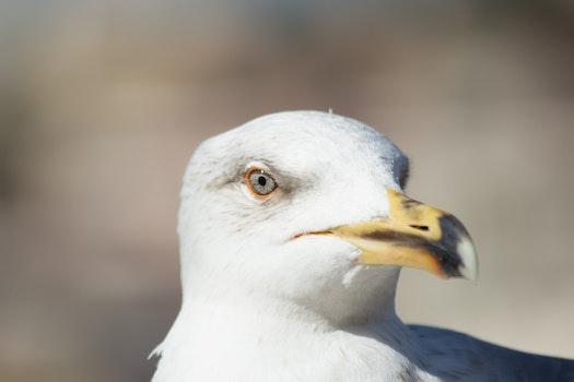 Sea Eagle Close Up Photography
