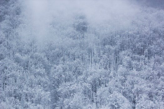 Frozen Trees during Daytime