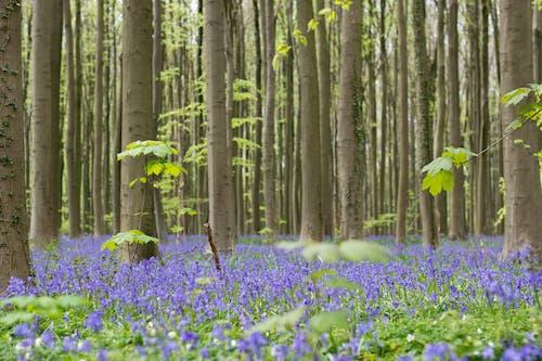 Gratis stockfoto met bloemen, bomen, bossen, decor