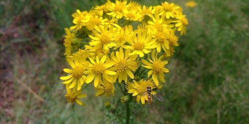 Fotos de stock gratuitas de abeja, amarillo, flor